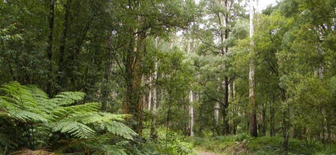 Otway Ranges Overview