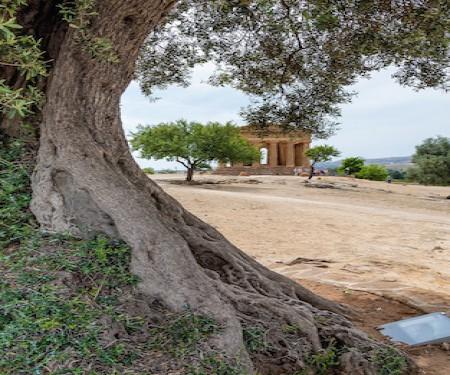 Explore Sicily Trip